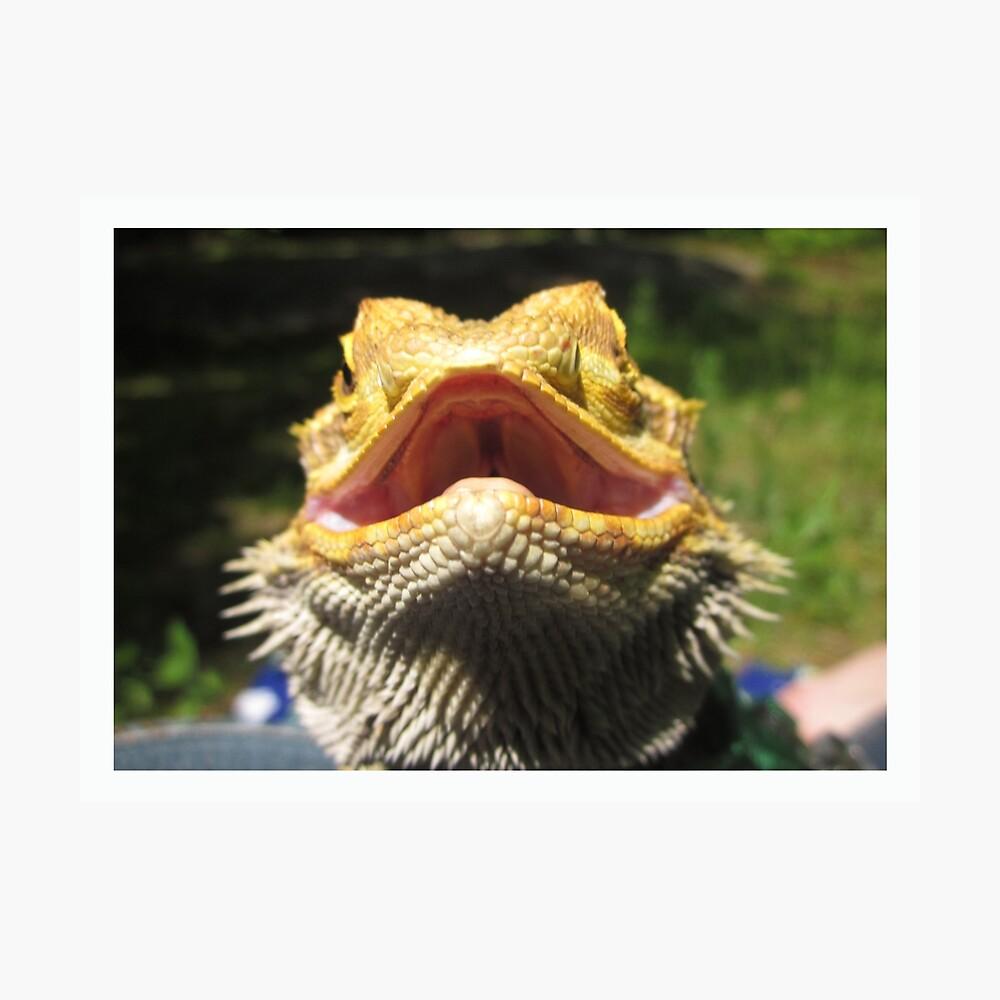 Bärtiges Drachenlächeln Fotodruck
