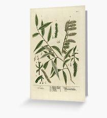 Salix Greeting Card