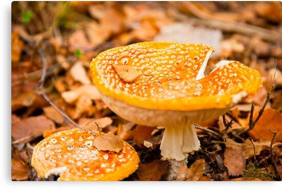 Woodland Fungi by DonDavisUK