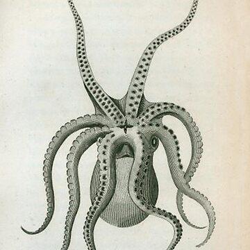 Octopuss illustration by Geekimpact