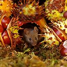 Autumn wild mouse with Horse chestnuts - conkers  by Simon-dell