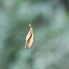 Sidecut Metropark Leaf Attached to a Spider Web by btmucci