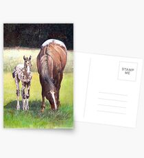 Appaloosa Mare and Foal Horse Portrait Postcards
