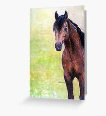 Buckskin Quarter Horse Halter Horse Portrait Greeting Card