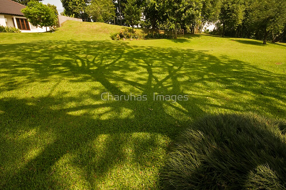 Shadows by Charuhas  Images