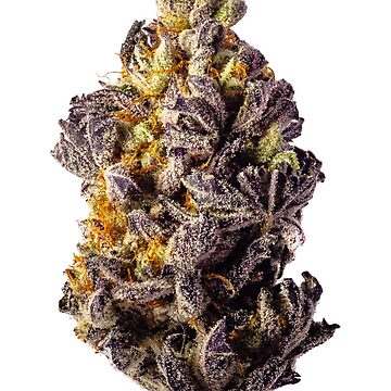 Purple Dolato by shanerounce
