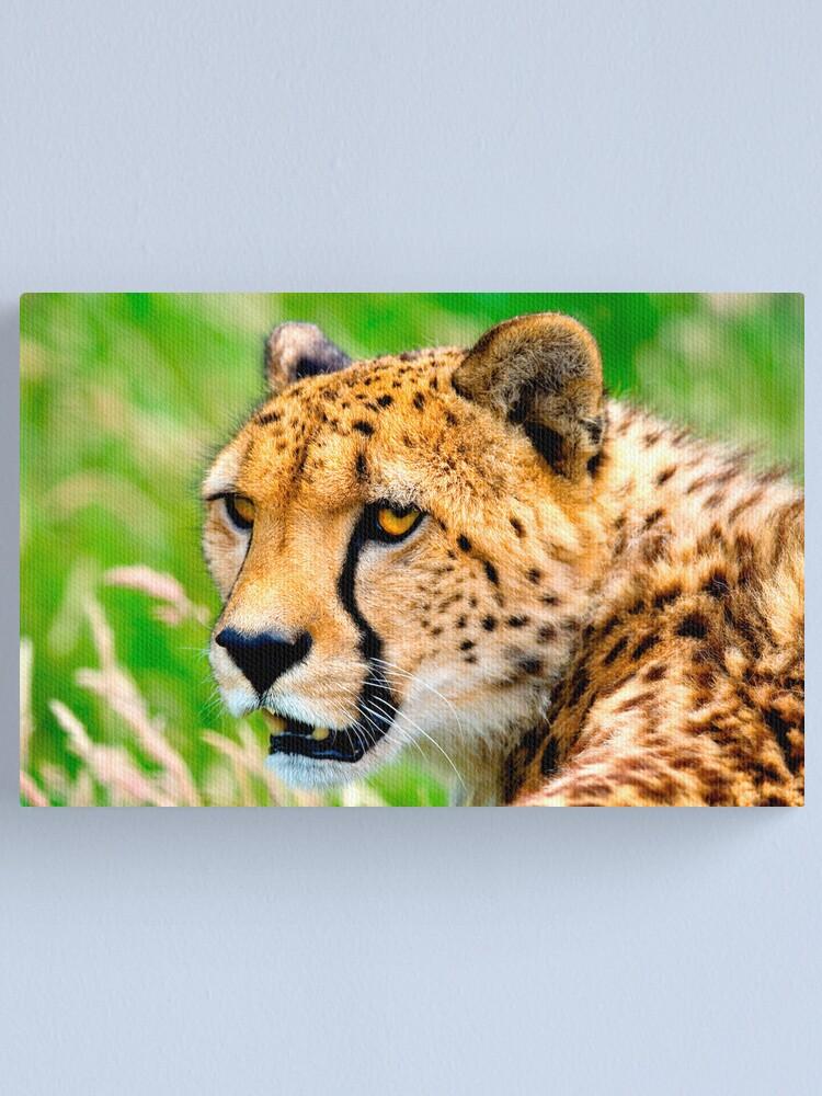 Alternate view of Cheetah Canvas Print