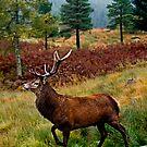Red Deer Stag by Stuart Robertson Reynolds