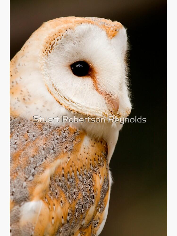 Barn Owl by Sparky2000