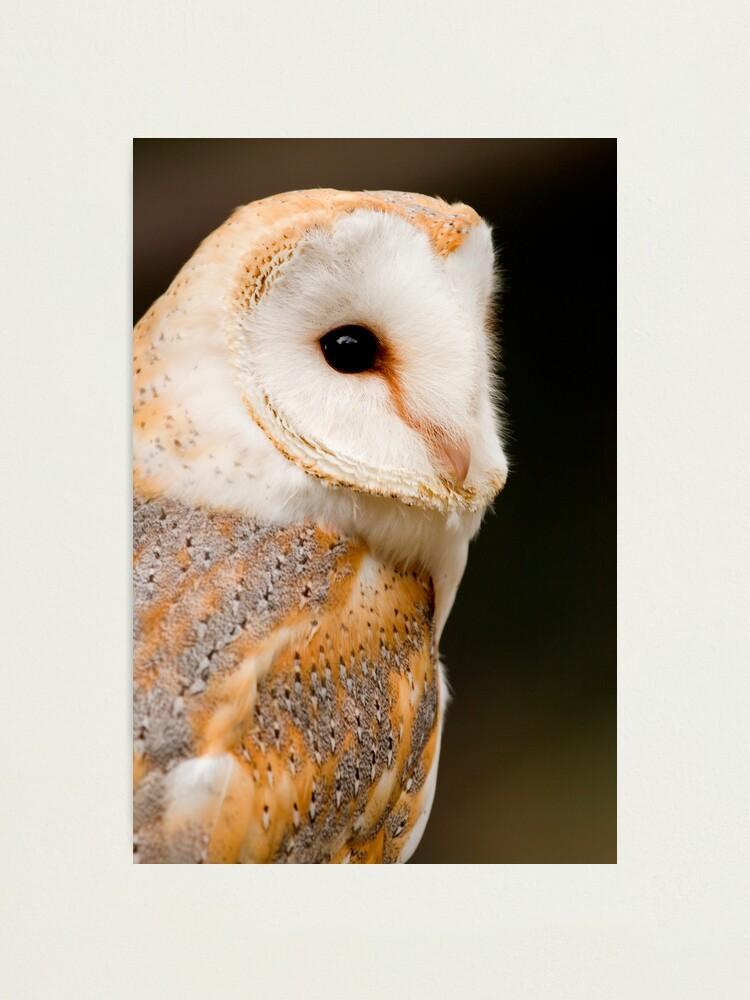 Alternate view of Barn Owl Photographic Print