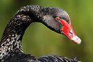Black Swan by Stuart Robertson Reynolds