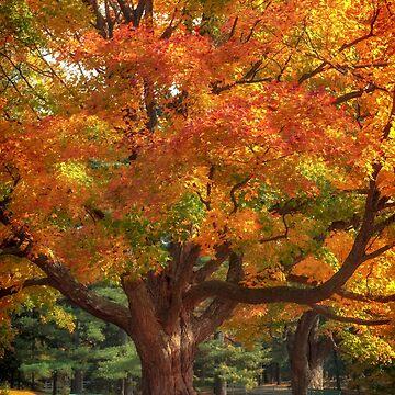 Autumn Colours 2 - MacKenzie-King Estate by Photograph2u