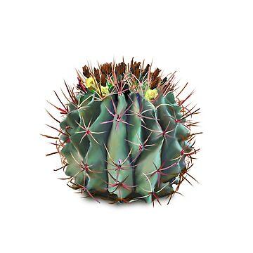 Cactus de hannahahkane