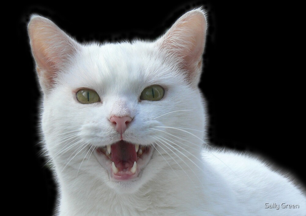 'Vampire cat, He Vants Blood!! Bwhahah....' by Sally Green