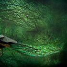 Peacock Wood by missmoneypenny