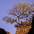 A tree, a wall and the sky by indiafrank