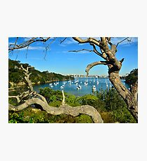 Sirius  Cove Photographic Print