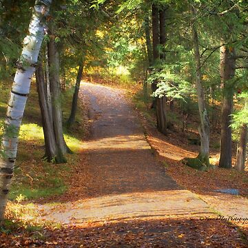 Lakeside Trail by Photograph2u