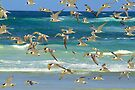 Birds of a Feather by Stuart Robertson Reynolds