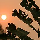 Thai Sunset by Stuart Robertson Reynolds