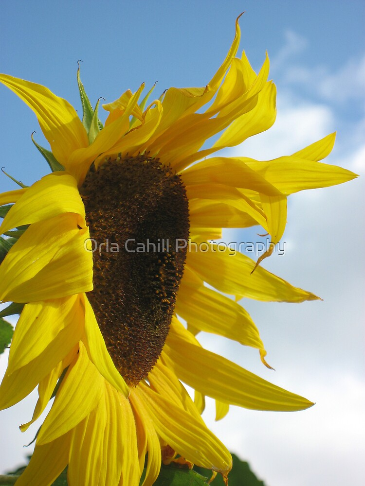 Sunny Day no.2 by Orla Cahill Photography