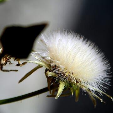 ©NS On The Bright Side Of Seeds IIA. by OmarHernandez