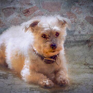 A Dear Little Dog Called Oscar by colinsart