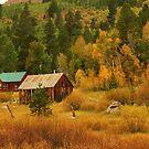 Sierra Nevada Colors by Barbara  Brown