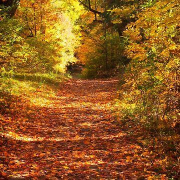Autumn Colours 3 - MacKenzie-King Estate by Photograph2u