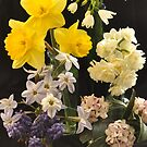Spring Flowers by Julie Sherlock