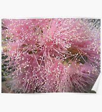 lilli pilli Poster
