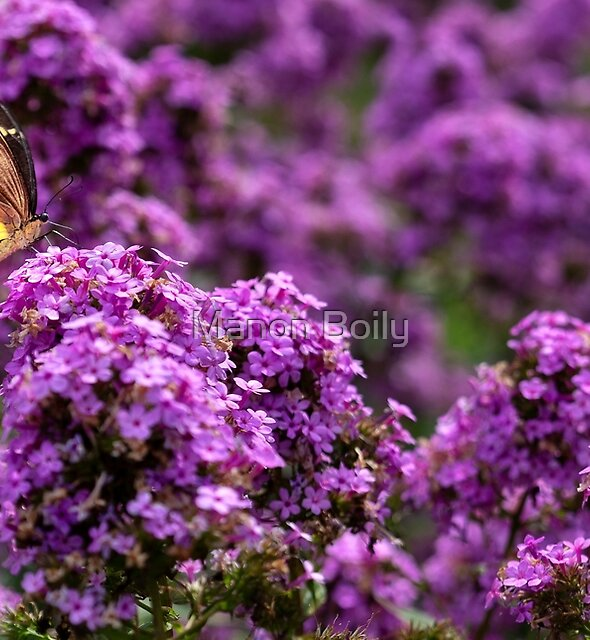 Paradise for butterflies by Manon Boily
