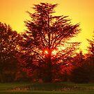 The Fire Tree (L'Arbre de feu) by PhilippeContal