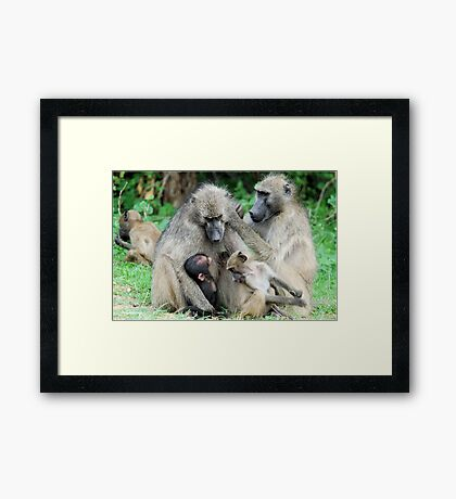 FAMILY TIME - THE CHACHMA BABOON - Papio ursinus Framed Print