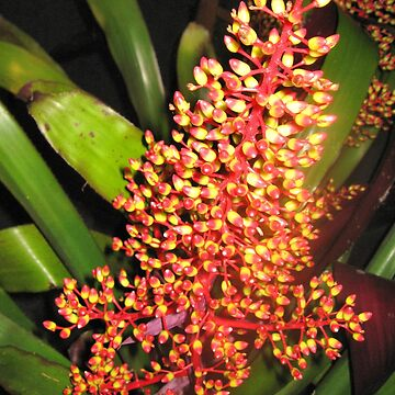 Spectacular Bromeliad Flower by gigges