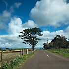 Springtime on a Tasmanian Country Road by Clare Colins