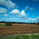 Stripey Fields by Clare Colins