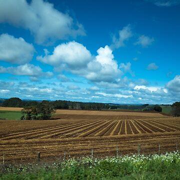 Stripey Fields by colinsart