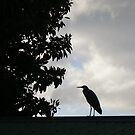 Heron, photograph by Vic Potter by Vic Potter