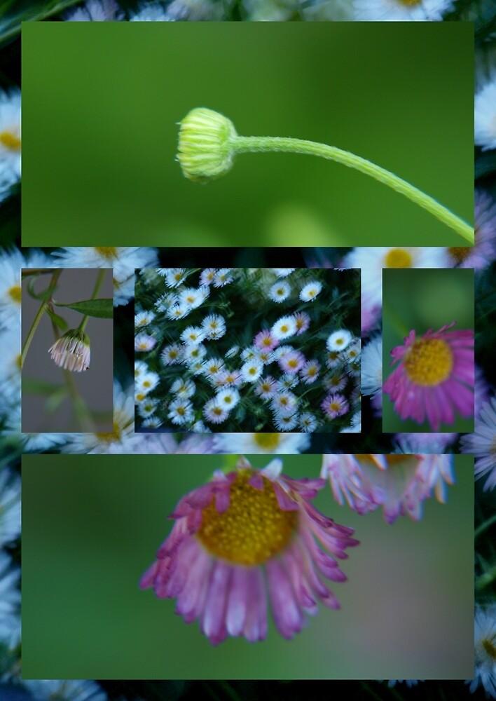 remebering spring by byzantinehalo