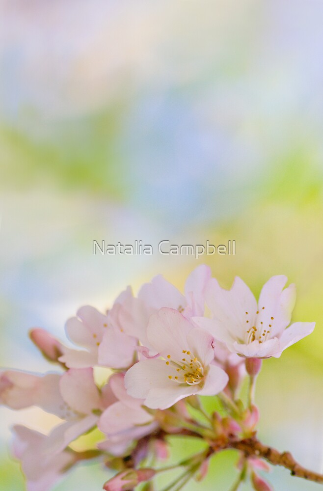 to be overcome by the fragrance of flowers is a delectable form of defeat...   by Natalia Campbell