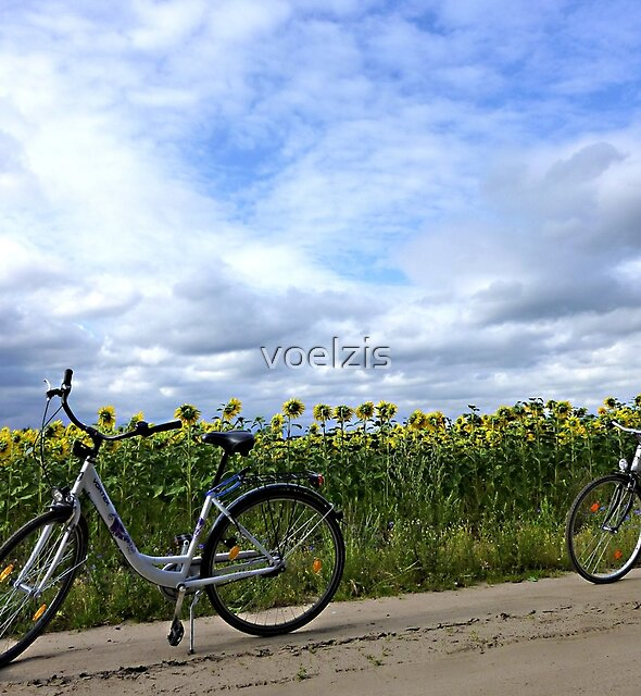Picnic between sunflowers by voelzis