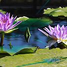 Midnight Caprice Water Lilies by Robert Armendariz