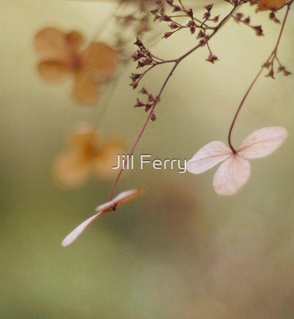 Butterflies by Jill Ferry