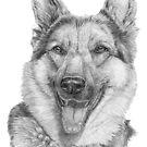 German Shepherd - b/w by doggyshop