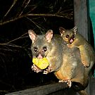 Brushtail Possum and Baby by Virginia McGowan