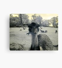 Don't calle ME 'Old Man'! Canvas Print