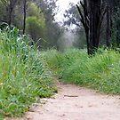 Path to... by elizabethrose05