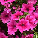 Real Beautiful Flowers outside by kamtec1