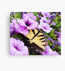 Eastern Tiger Swallowtail Butterfly (Open Wings) Canvas Print